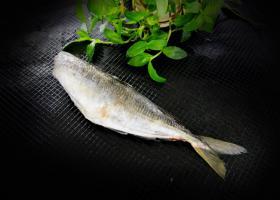 新西兰竹荚鱼